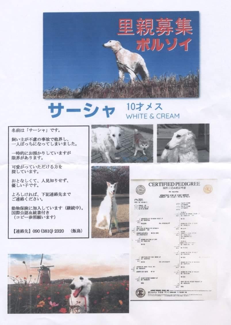 飯島 犬 猫 病院