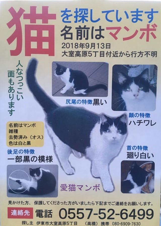猫 ggt 高い